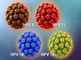 HPV คืออะไร?
